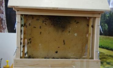 2017.03.31 Fascynujący świat pszczół _11