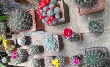 2019.06.05 Warsztaty botaniczne