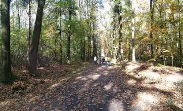2019.10.18 Wycieczka do lasu
